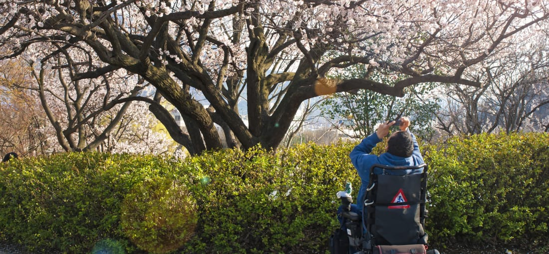 cherry trees accessible travel