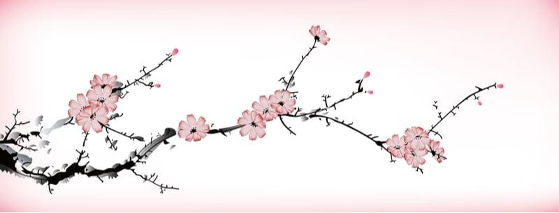 cherry blossom love haiku