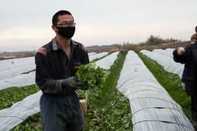 kagawa farming