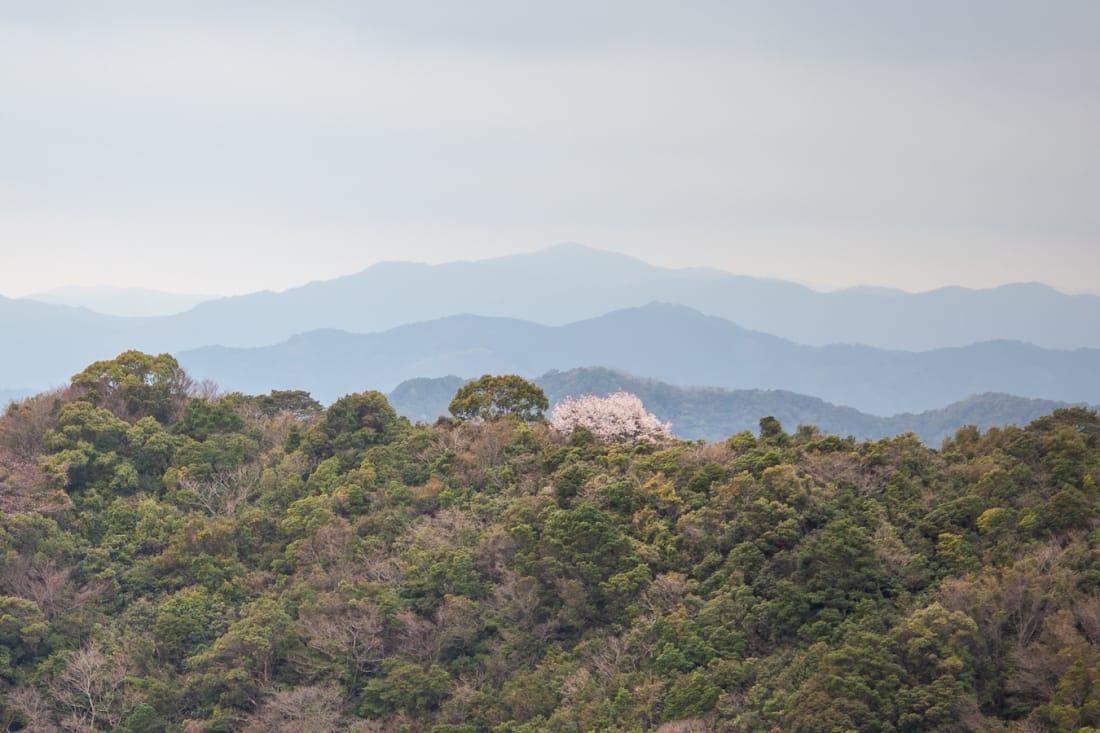 Sakura Shikoku 88 pilgrimage