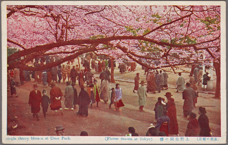 old photo cherry blossoms in ueno