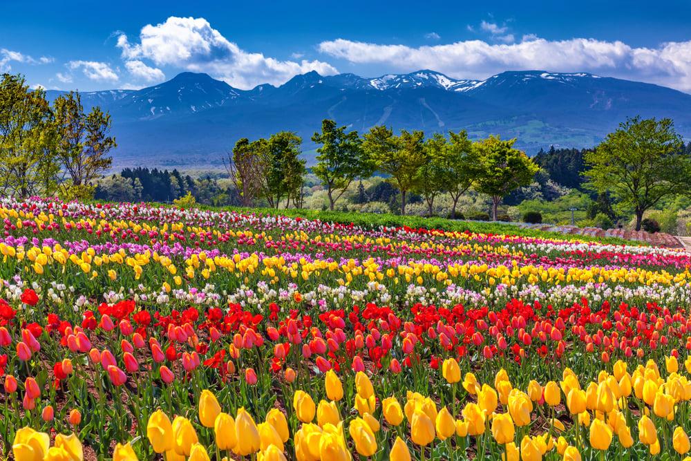 spring flowers Nasu Tochigi Japan